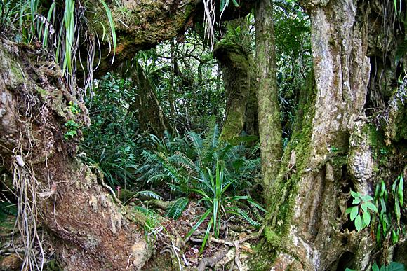 Sentier du Trou de Fer, Forêt de Bélouve