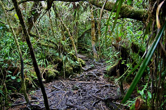 Sentier de l´Ecole Normale, Forêt de Bélouve