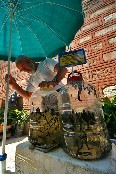 Istanbul, prodavač pijavic